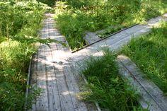 尾瀬の大清水の木道 oze-ooshimizu 090816 尾瀬を疑似体験