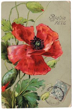 Poppy postcard  Bonne Fete (Happy  Birthday)
