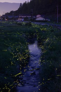 """River of Fireflies,"" photograph by Tsuneaki Hiramatsu"
