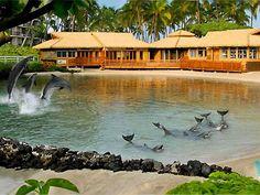 Dolphins at Hilton Waikoloa Village, Hawaii