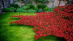 40 powerful pictures of the Tower of London poppies