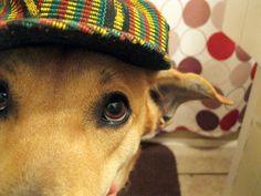 Eightymillion: My Life With Dogs: The Birthday Boy(s)  #DogBirthday #CrazyDogMom #Photography