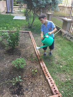 Berkeley students watering the garden now that rainy season has passed.