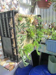 Haz tu propio jardin vertical | ECOagricultor