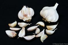 Organic Seed Garlic For By Filaree Farm