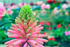 Marjorie McNeely Conservatory Sunken Garden, Conservatory, Minnesota, Plants, Travel, Home, Ideas, Flowers, Viajes
