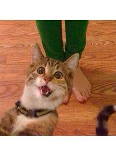 cat selfies - funny animal pictures - cosmopolitan.co.uk
