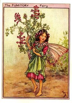 Fumitory Flower Fairy Vintage Print,  Cicely Mary Barker-printed c.1950 – The Fumitory Flower Fairy is one of Cicely Barkers Wayside Flower Fairies.