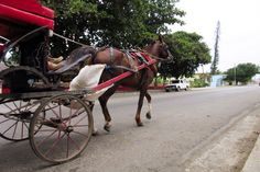 In the small town of Guanabo, locals still use horse carriages as a mode of transportation. Cuba, June 2015