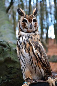 P.O.W. - Pets, Owls, Wildlife