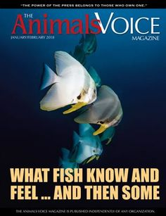 The Animals Voice: What Fish Know and Feel