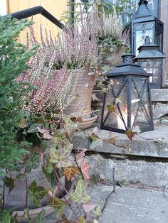 Joulun odottelua Plants, Planters, Plant, Planting