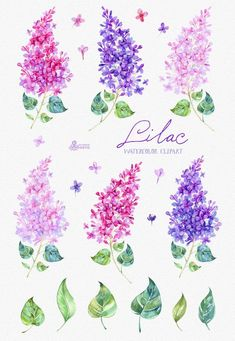 Quotes About Wedding : Lilac Watercolor Clipart card floral elements wedding invitation greeting diy clip art flowers quote spring valentines violet Watercolor Cards, Watercolor Flowers, Watercolor Paintings, Watercolor Wedding, Tattoo Watercolor, Lilac Painting, Watercolor Ideas, Watercolor Quote, Valentines Watercolor