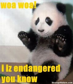Panda knows his worth :)    Funny Animal Demotivations   Wild Domestic Animals Look Stories and Photos