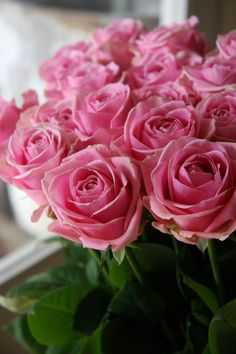 Beautiful         flower-Rose