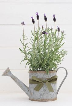 Lavender in watering can. Shop here: www.hardtofind.com.au                                                                                                                                                                                 More