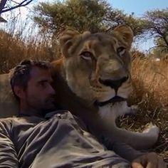 Netz-Highlight Dieser Mann kuschelt mit Löwen!