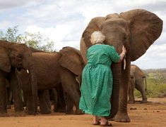 *.* Daphne Sheldrick has dedicated her life to raising orphaned elephants. Once they are old enough, they are taken to protected areas and integrated with other orphan groups. When Daphne visits, the elephants gather around her for a hug. www.SheldrickWildlifeTrust.org