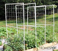 easy pvc tomato trellis, gardening, raised garden beds, repurposing upcycling