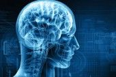 New Study Finds Fructose Alters Genes in the Brain, Sabotages Learning and Memory