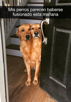 """Funnowtime, Social Fun Platform We share in funny pictures and funny animals categories while sharing while """"Funny Dog Pictures Of The Day - 25 Pics"""" Funny Animal Jokes, Funny Dog Memes, Animal Humour, Memes Humor, Cute Funny Dogs, Cute Funny Animals, Humorous Animals, Cute Animal Pictures, Funny Animal Pictures"""