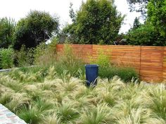 Like this fencing ... solid but still see thru & modern. Plus great landscaping idea!