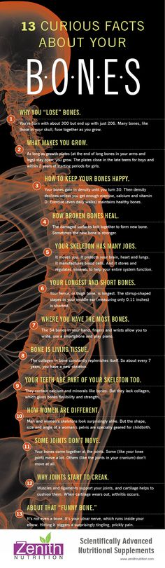 "13 Curious Facts About Your Bones. Why you lose bones, What makes you grow, How to keep your bones happy, how broken bones heal, Your skeleton has many Jobs, Your longest and short bones, Where you have the most bones, Bone in living tissue, Your teeth are part of your skeleton too, How women are different, Some joints don't move, Why joints start to creak, About that ""funny bone."" Best supplements from Zenith Nutrition. Health Supplements. Nutritional Supplements. Health Infographics"