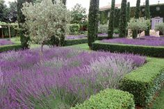 Loovvee!!! Lavender with boxwood hedging. Maybe with a lemon tree in the middle?