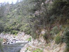 Karangahake gorge, keep an eye out for the cyclists