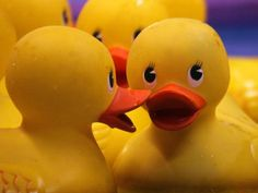 Greenwood Village Fishing Derby & Rubber Duck Waddle is April 23