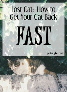 Cat toilet training in easy steps: Toilet training your cat is an easier task than you might think. Several techniques can be used for training your cat to use Lost Cat Poster, Cat Care Tips, Pet Care, Pet Tips, Cats Outside, Cat Exercise, Cat Hacks, Pet Vet, Cat Pose