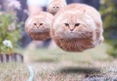 猫が浮いて見えたら疲れているらしいですよ...