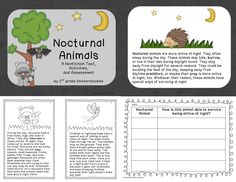 Nocturnal Animals: Full Color Book, Black Lined Student Booklet, Activities, and Assessment by 2nd Grade Snickerdoodles $