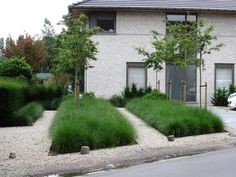 Siegrassen geven in het najaar een prachtige kleur aan uw tuin, maar ook in andere jaargetijden geven ze een prachtig effect. Vaak worden siegrassen gebruikt rondom vijvers, of in japanse tuinen. S...