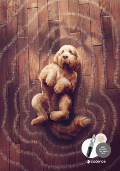 """「ペットを同じサイズに保ちましょう」その一点にフォーカスした掃除機の広告。ブラジルで実施された掃除機のシリーズプリント広告をご紹介。  Cadenceという掃除機ブランドが、ペットを飼っている人なら誰もが共感するであろう「ペットの抜け毛」問題をテーマにこんなクリエイティブを制作しました。  ・犬篇   ・猫篇   家のいたるところにペットの毛が落ちていることを、「ペットが実際のサイズ以上の面積を占有している状態」と捉えて、「ペットからシルエットに合わせて放射状に伸びる抜け毛」というアイデアを作りました。  コピーは、""""Keep your pet the same size.(あなたのペットを同じサイズに保ちましょう)""""  テーマをペットの抜け毛にしぼることで、尖ったクリエイティブを作ることに成功したプリント広告"""
