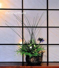 一日一華:スピアグラス の画像|華道家 新保逍滄