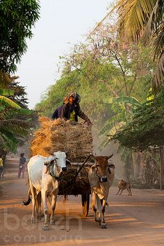 Archaic hay-cart  | Kandal Province, Cambodia Village Photography, Indian Photography, Street Photography, Backpacking South America, Backpacking Asia, Laos, Angkor Wat Cambodia, Bible Images, Rural India