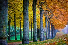 Fall colors ~ photo by Annemette Kuhlmann on 500px