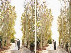 Maleny Wedding | Sneak Peek Plants, Photography, Wedding, Valentines Day Weddings, Photograph, Fotografie, Photoshoot, Plant, Weddings