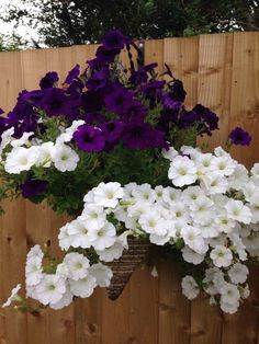 My lovely hanging baskets in #awesomeaugust