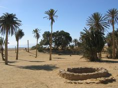 The 12 springs/wells at Elim. Exodus 15.  Then they came to Elim, where there were twelve springs and seventy palm trees, and they camped there near the water.
