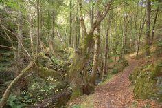 En este bosque puede que encuentres Xanas o Trasgus detrás de algún árbol #SantaEulalia #Oscos Cascada Seimeira