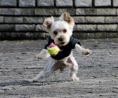 Hondenspeeltjes kopen? Vergelijk nu 23 webshops | Thuisvergelijken.nl