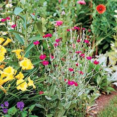 Campion Get detailed growing information on this plant and hundreds more in BHG's Plant Encyclopedia.