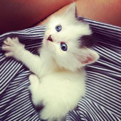 kitttty<3 punkinn