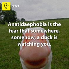 #Anatidaephobia, #Ducks, #Watching, #Waiting
