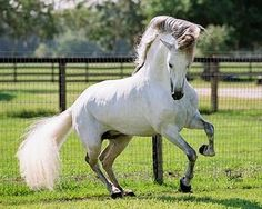 caballos andaluces - Google Search