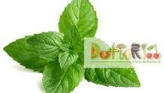 melisă, lămâiţă, floarea stupilor, busuiocul stupului, iarba roilor, – Căutare Google Spinach, Vegetables, Google, Vegetable Recipes, Veggies