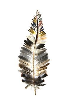 feather-of-feathers (mary jo hoffman) - Inspiration - zeichnungen Feather Crafts, Feather Art, Bird Feathers, Feather Wreath, Crafts With Feathers, Feather Texture, Painted Feathers, Ruffled Feathers, Turkey Feathers