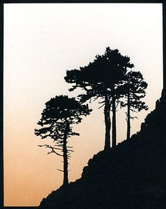 Scots Pine Trees Hand-Cut Papercut (large - sloping left) by JohnSpeight on Etsy